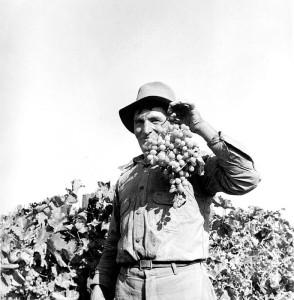 Grape picker